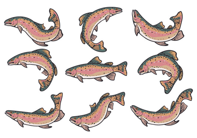 632x443 Rainbow Trout Vectors Free Vector Download 407937 Cannypic