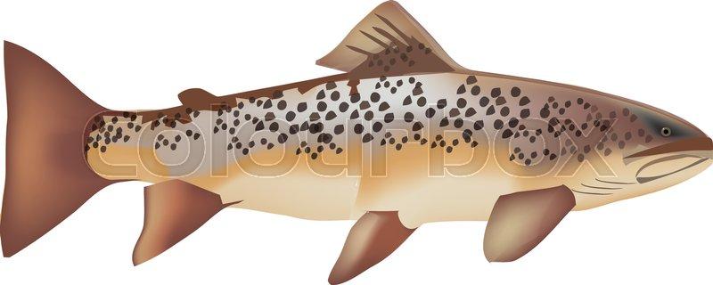 800x320 Symbol Predator Fishing Trout Stock Vector Colourbox