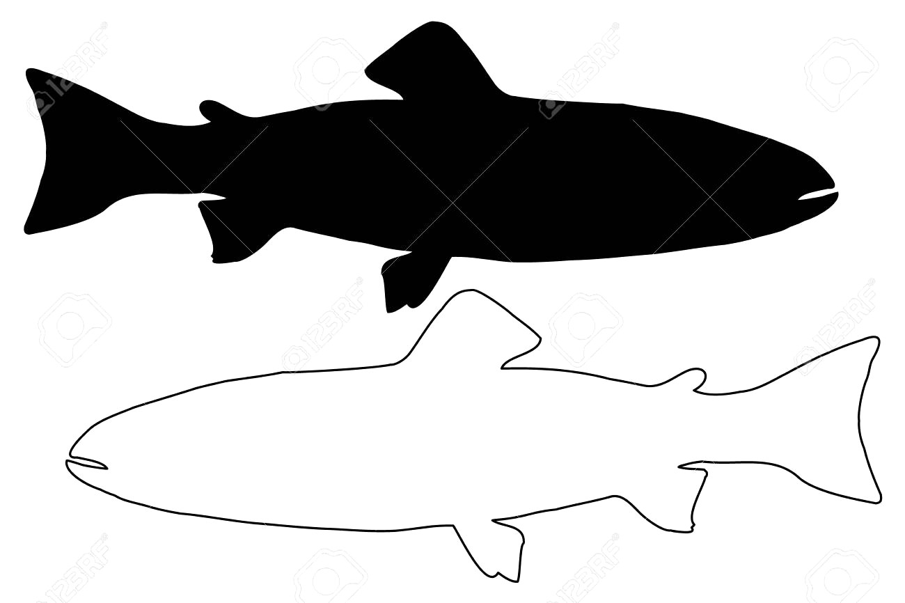 1300x866 80622073 Trout Silhouette Vector