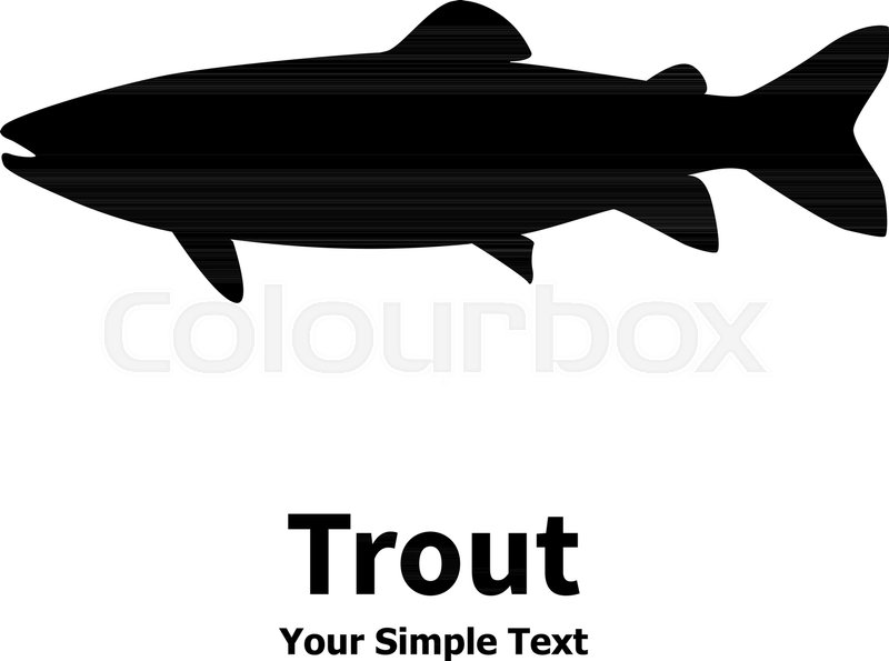 800x595 Vector Illustration Silhouette Of Trout Fish. Isolated Taimen On A