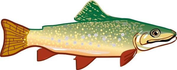 600x239 Vector Trout Free Vector Download (4 Free Vector) For Commercial
