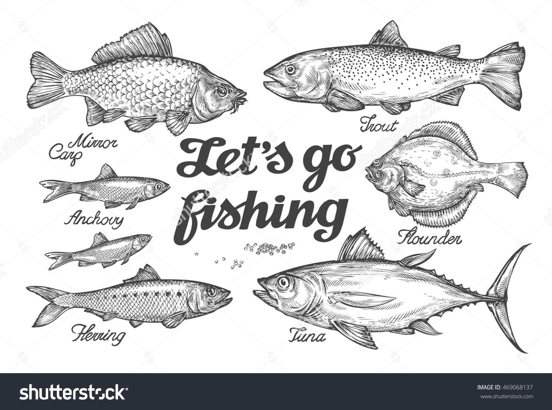 1500x1113 Fishing. Hand Drawn Vector Fish. Sketch Trout, Carp, Tuna, Herring