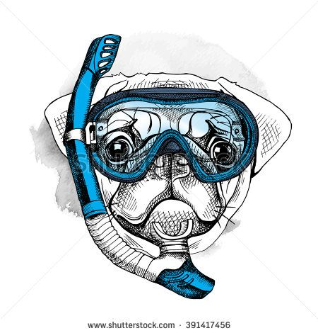 450x470 Pug Portrait In A Blue Diving Mask And With Tube. Vector