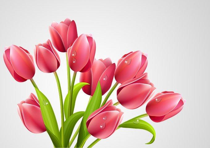 680x482 Free Tulip Vector Bouquet Illustration (Free) Psd Files, Vectors