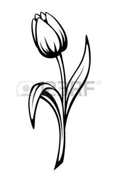 Tulip Vector Art