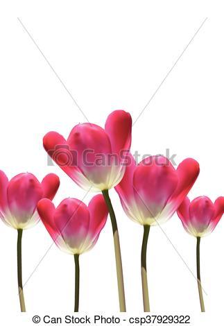 323x470 Realistic Vector 3d Tulips. Hyper Realistic 3d Vector Tulip