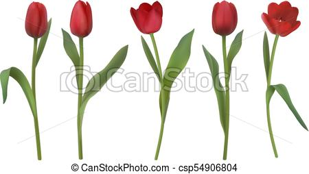 450x254 Realistic Vector Tulips. Set Of Red Realistic Vector Tulip Flowers