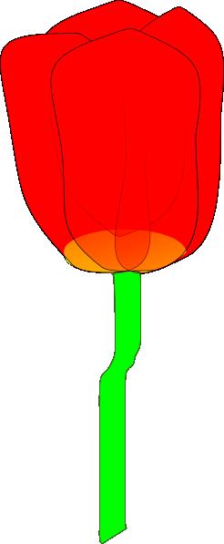 246x597 Tulipan Clip Art Free Vector 4vector