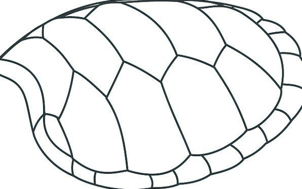 596x374 Turtle, Bomb, Patterns, Designs, Shell, Black And White, Cover