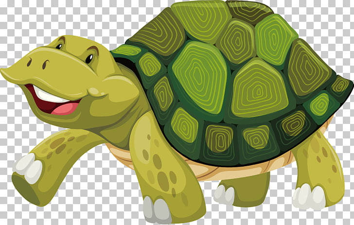 728x463 Turtle Shell Stock Photography , Turtle Png Clipart Free