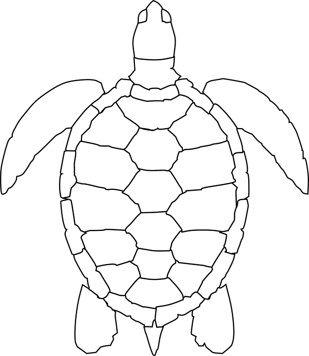 625x720 Shell Clipart Sea Turtle ~ Frames ~ Illustrations ~ Hd Images