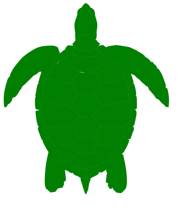 617x700 Shell Clipart Turtle