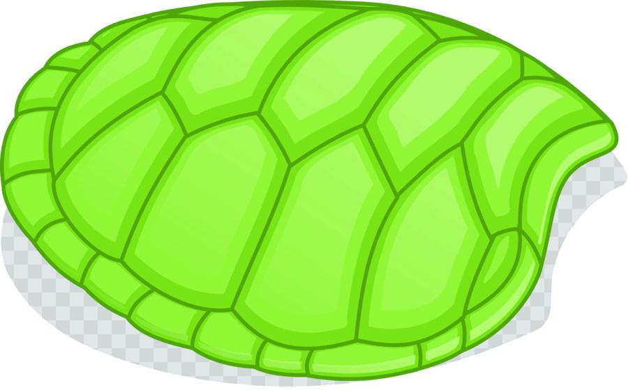 900x560 Turtle Shell Stock Photography Illustration Vector Art Clip