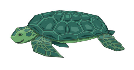 455x240 Turtle Shell Photos, Royalty Free Images, Graphics, Vectors