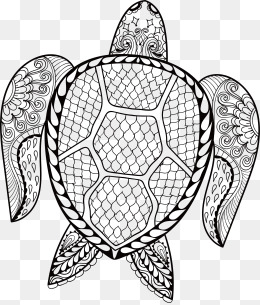260x305 Black And White Dry Turtle Shells, Black And White, Dry, Turtle