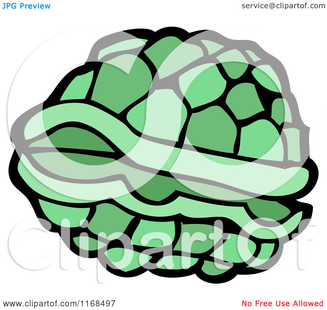 1080x1024 Cartoon Of A Turtle Shell