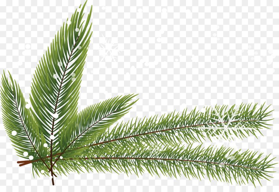 900x620 Fir Spruce Pine Twig Leaf