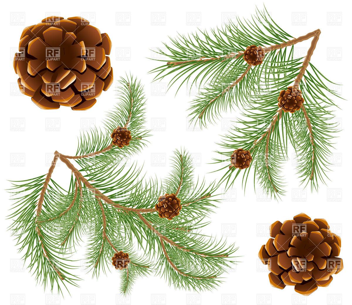 1200x1039 Pine Cones With Pine Needles Twig Vector Image Vector Artwork Of