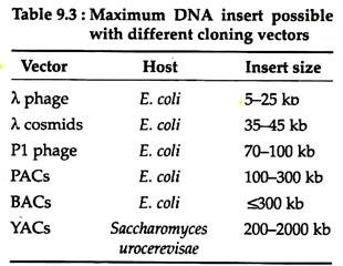 310x240 6 Main Types Of Cloning Vectors Biotechnology