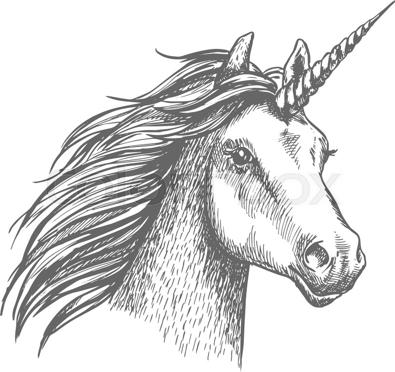 800x753 Unicorn Head. Mythical Heraldic Equine Animal With Horn. Vector