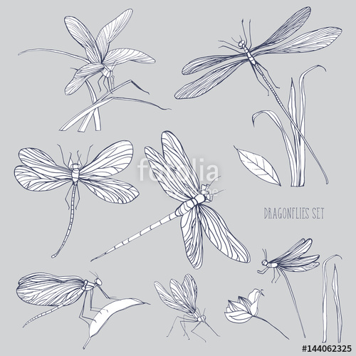 500x500 Set Of Various Dragonflies In Different Poses. Monochrome Hand