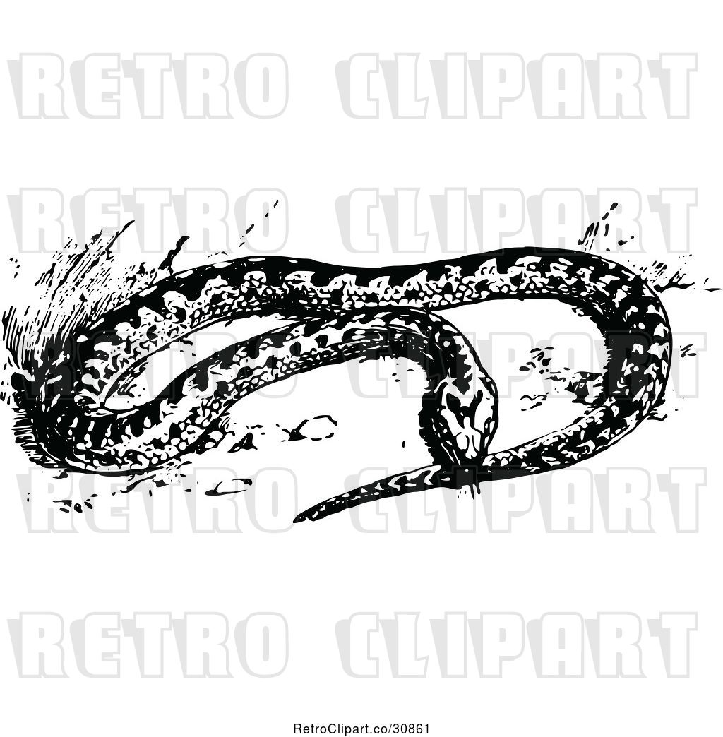 1024x1044 Vector Clip Art Of Retro Adder Snake By Prawny Vintage
