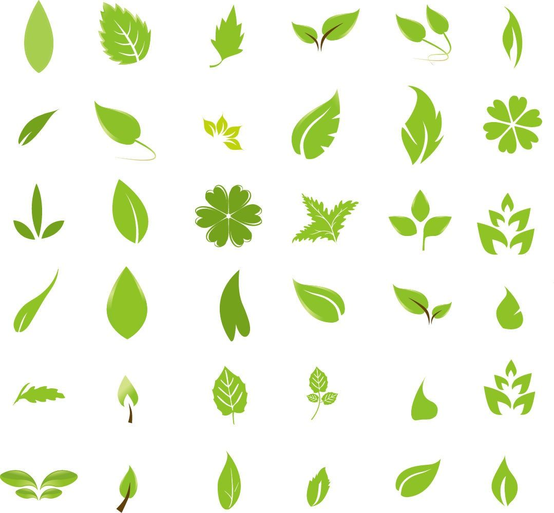 1079x1000 Free Graphic Design Green Leaf Design Elements Free Vector