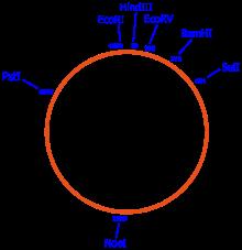 220x227 Vector (Molecular Biology)