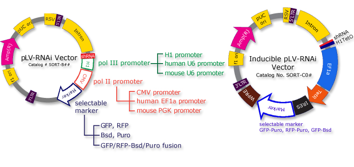 710x336 Bioproduct Molecular Biology Rnai, Sirna, Shrna And Mirna Plv