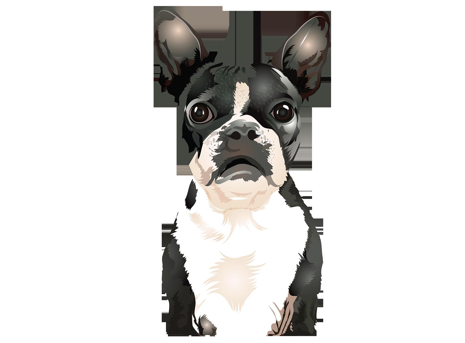 Vector Boston Terrier