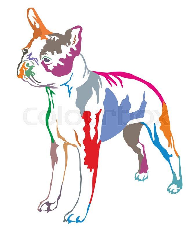 676x800 Colorful Decorative Portrait Of Standing In Profile Boston Terrier