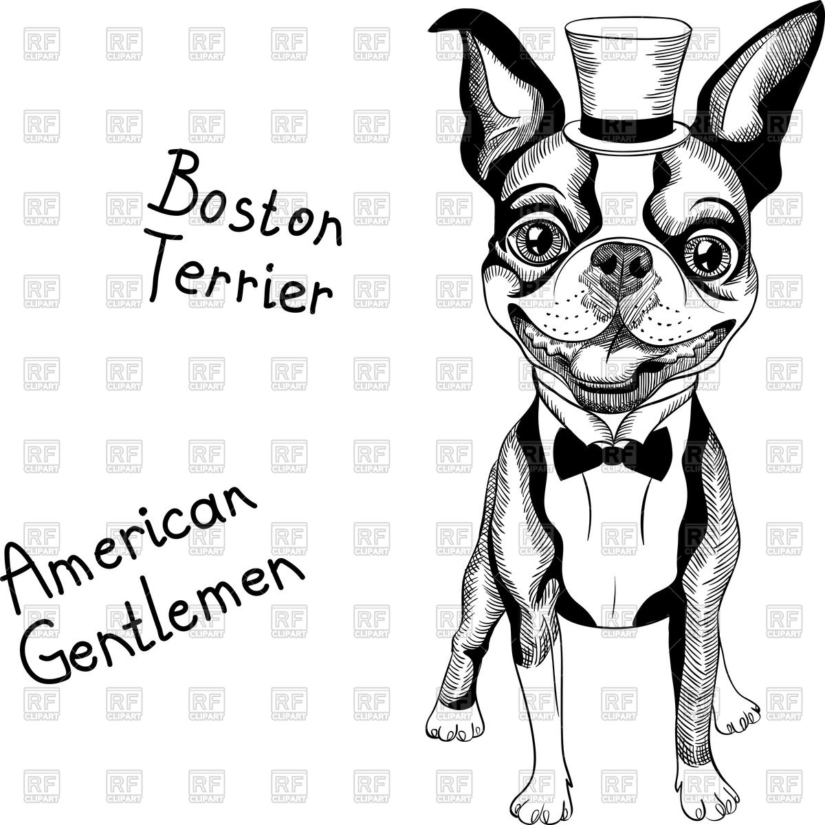 1200x1200 Hipster Dog Boston Terrier In Top Hat And Bow Tie Vector Image
