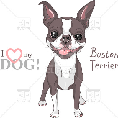 400x400 Smiling Dog Boston Terrier Breed Standing Vector Image Vector