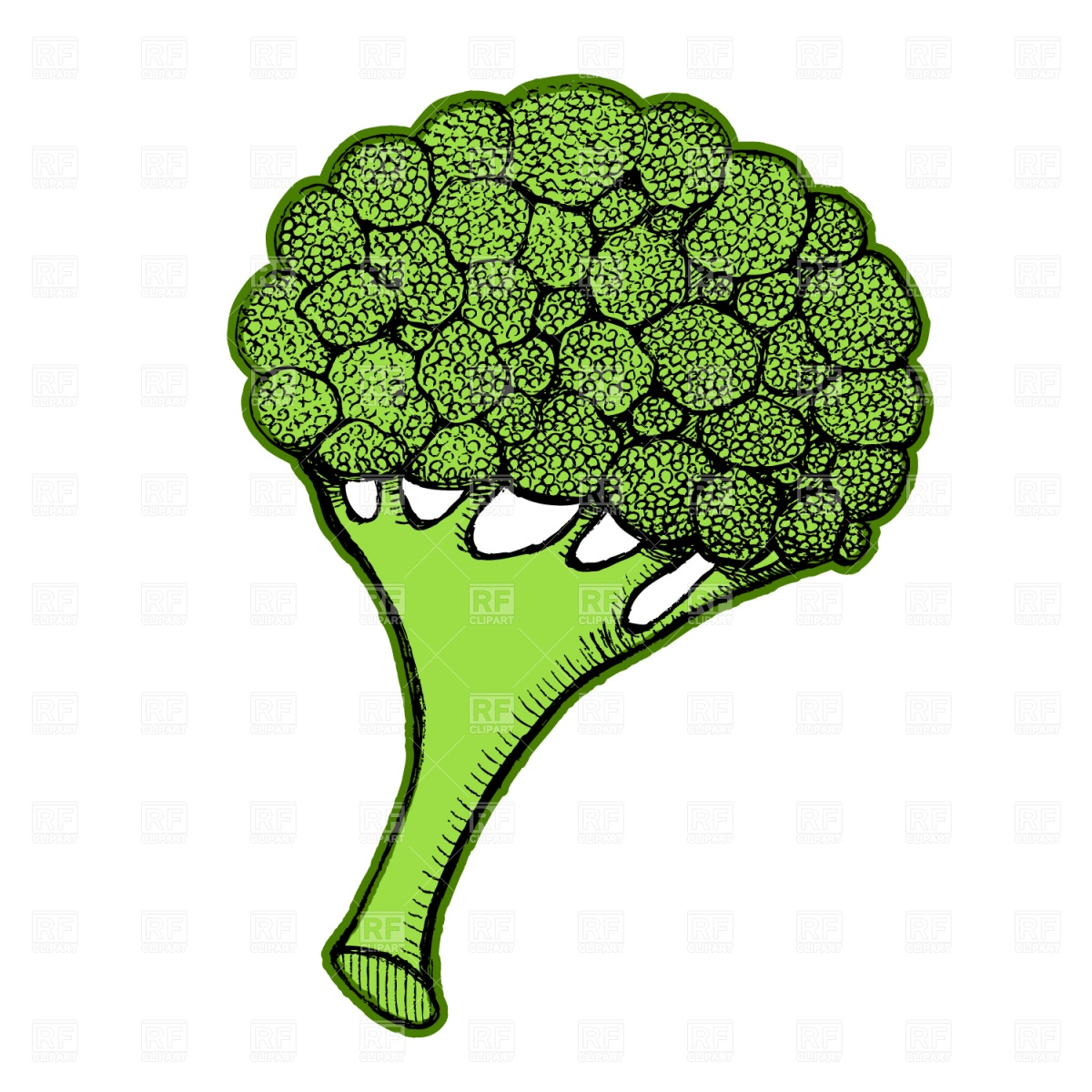 1200x1200 Broccoli Vector Image Vector Artwork Of Food And Beverages