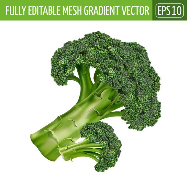 600x600 Broccoli Realistic Vectors Free Download