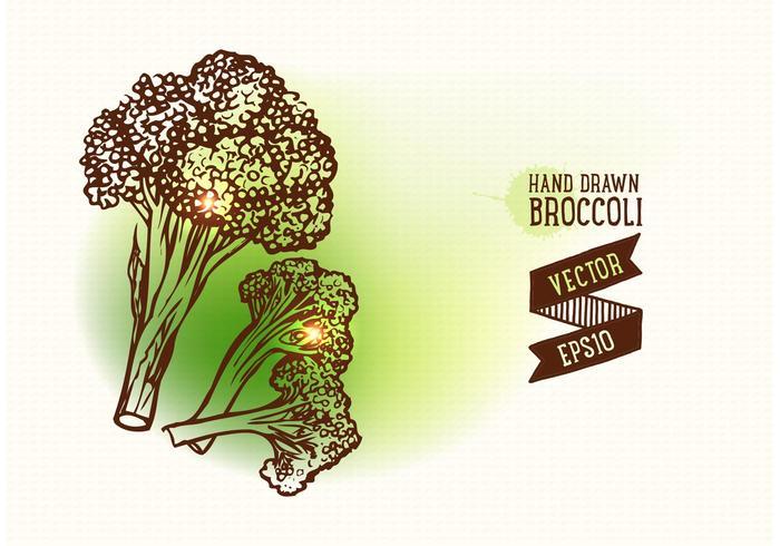 700x490 Free Hand Drawn Broccoli Vector Illustration