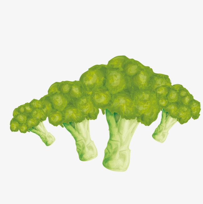 650x651 Vector Broccoli, Vegetables, Hand Painted Vegetables, Decorate Png