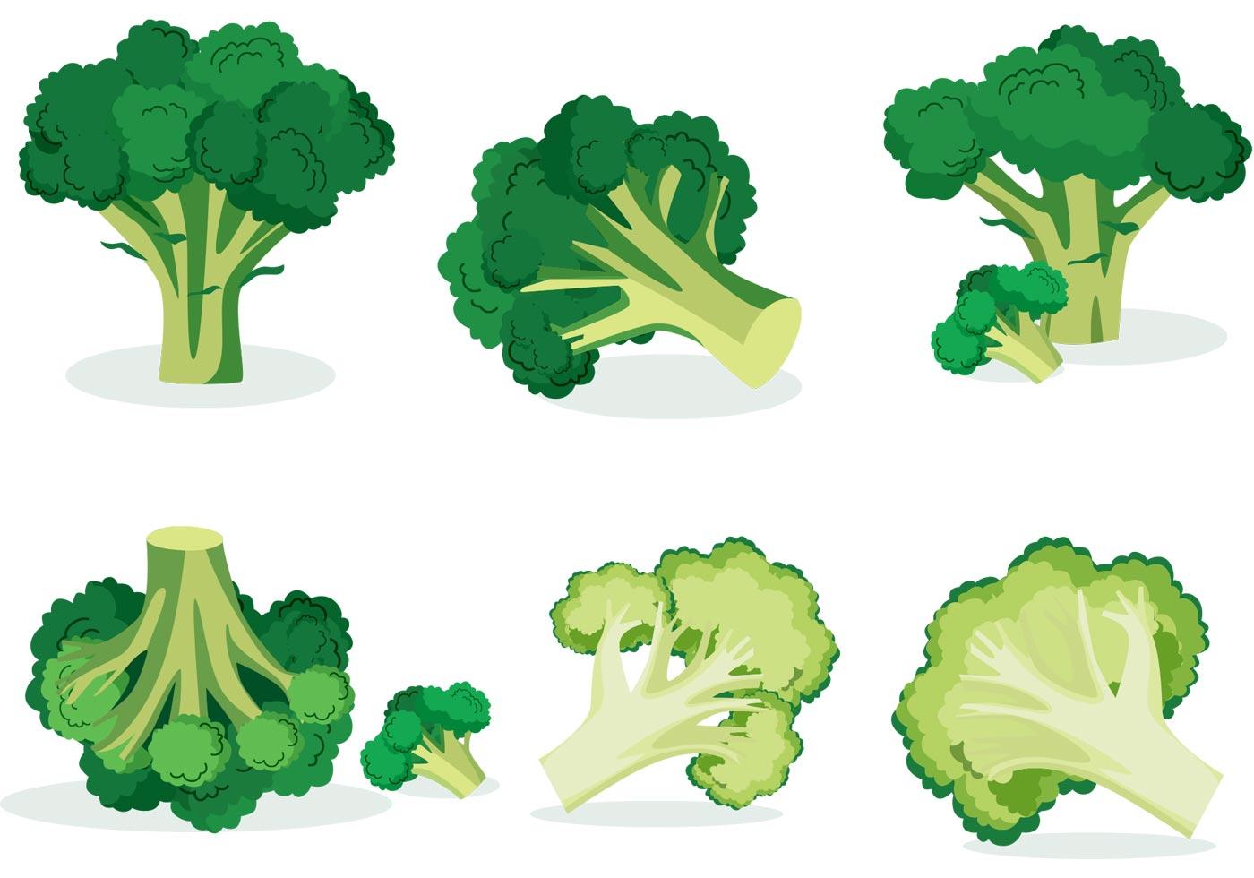 1400x980 Broccoli Free Vector Art