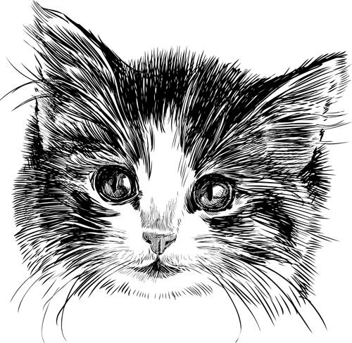 500x488 Hand Drawn Cats Head Vector Set Free Vector In Adobe Illustrator