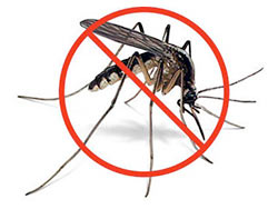 250x188 5 Things About Gm Insects For Vector Control Igtrcn