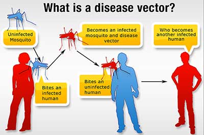 400x264 Vcehp Vector Control For Eh Professionals Ehs Cdc