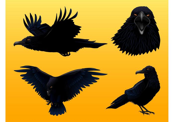 700x490 Crow Graphics Set