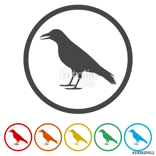 500x500 Crow Vector Illustration Design, Crow Silhouette, 6 Colors