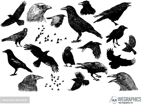 600x446 Drawn Crow Vector