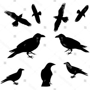300x300 Photostock Vector Crow Bird Poultry Animal Silhouette Sohadacouri