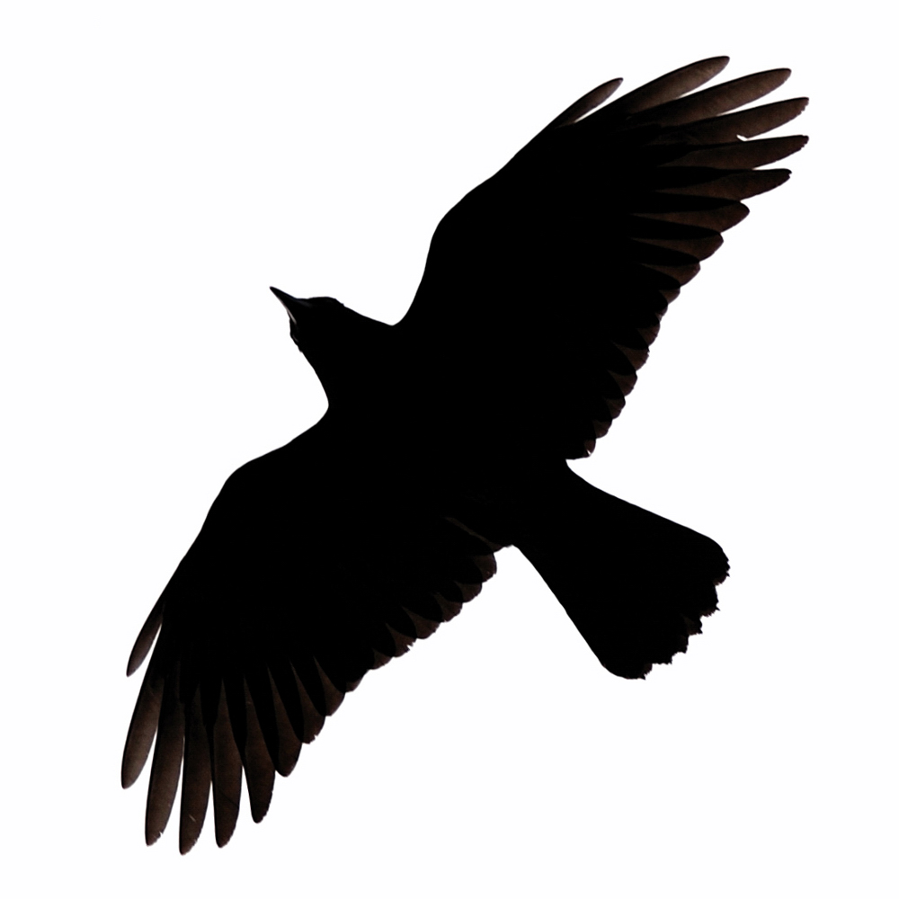 1000x1000 Critically Designed Crow Vector An Images Hub