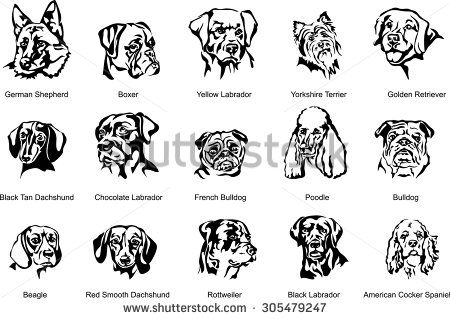 450x319 The Face Of A Dog, Breed Dog, Vector The Image Of A Dog Face, Dog