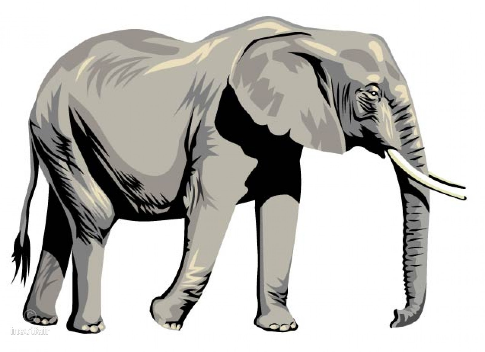 1600x1161 Large Elephant Realistic Vector Drawing With Ai