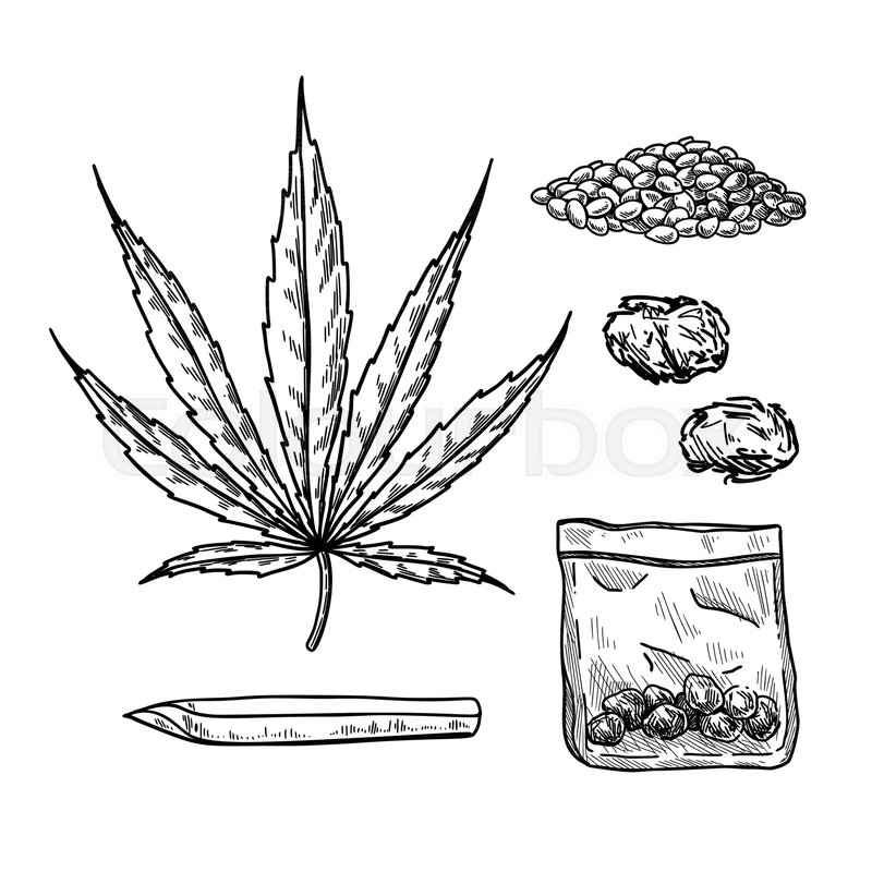 800x800 Marijuana Or Cannabis Vector Drawing Set. Plant Leaf, Buds, Joint