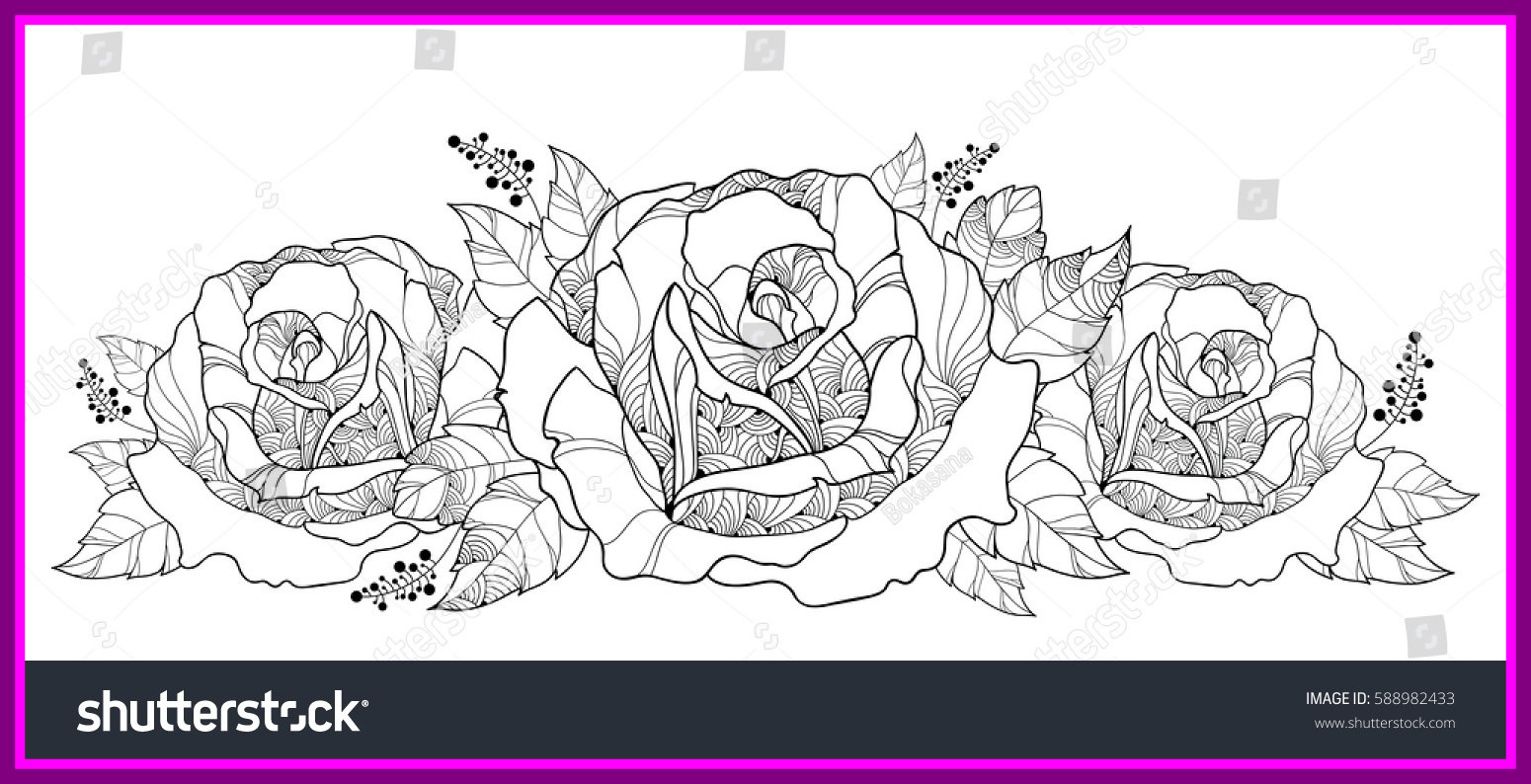 1550x794 Inspiring Vector Drawing Bouquet Outline Rose Flower Stock Of